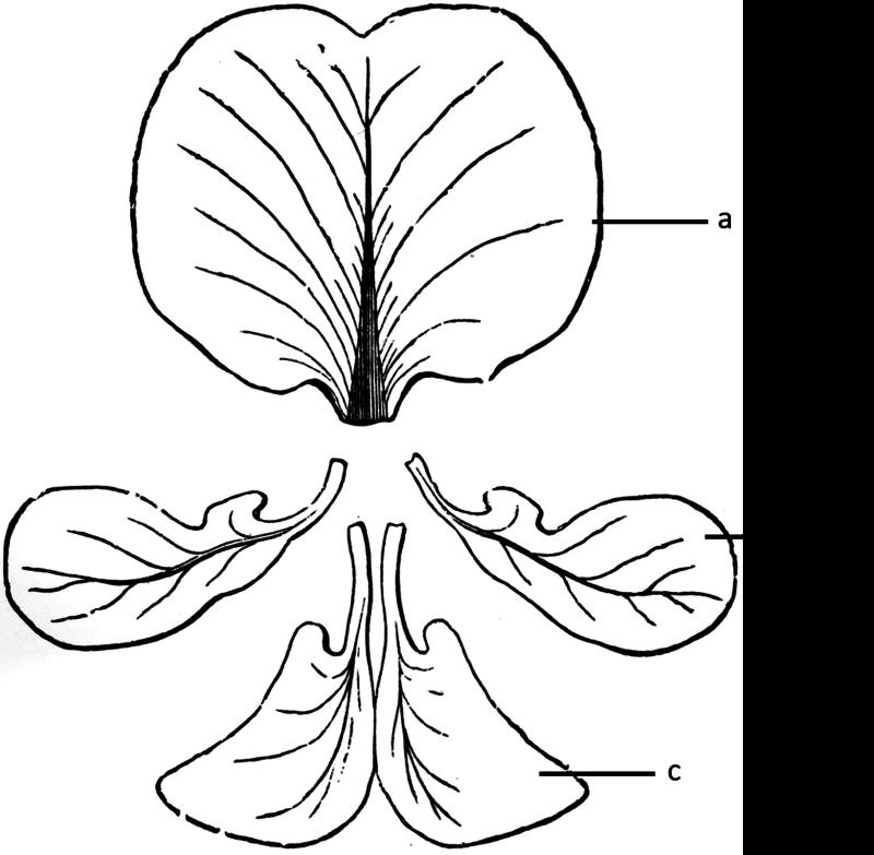 dicotyledonous and monocotyledonous seeds
